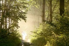 Spring forest path with morning sunbeams royalty free stock photos