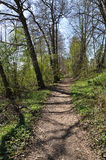 Spring Forest Path Vertical Stock Photo