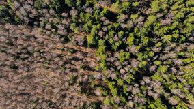 Spring forest. Photographed from the air. stock photos