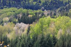 Spring Forest in Pyrenees Royalty Free Stock Photography