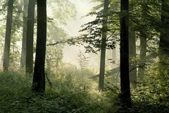 spring forest, rays of light through the trees Royalty Free Stock Images