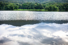 Spring forest is reflected in the river Royalty Free Stock Images