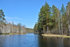 Spring forest river. Royalty Free Stock Photos