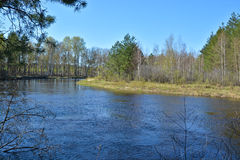 Spring forest river. Royalty Free Stock Photo