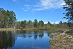 Spring on the forest river. Stock Images