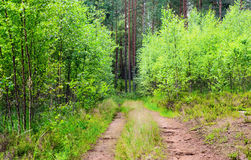 Spring forest road Royalty Free Stock Image