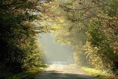 Spring forest road with morning sunbeams stock photography