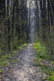 Spring forest. road in the woods Stock Image