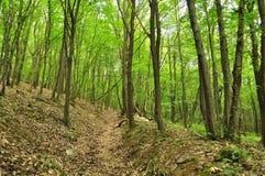 Spring forest scene Stock Photo