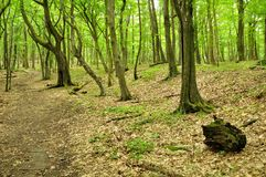 Spring forest scene Stock Images