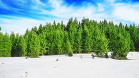 Spring Forest Scenic Landscape Royalty Free Stock Photo