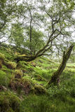 Spring  in the Forest, Scotland Royalty Free Stock Photography