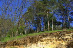 Spring forest on several underground soil layers Royalty Free Stock Image