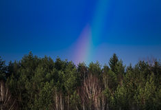 Spring forest and sky. With fir trees and birches and rainbow Royalty Free Stock Photo