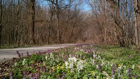 Spring in Forest royalty free stock photography
