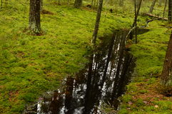 Spring forest stream reflecting the oil on the water surface Royalty Free Stock Images