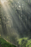 Spring forest with sunbeams Stock Image