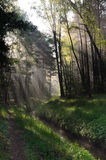 Spring forest with sunbeams Stock Images