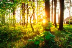 Spring forest with sunbeams through trees. Green forest park in bright sunlight stock photos