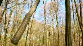Spring forest sunny day. 4k stock footage