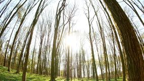 Spring forest sunny day. 4k stock video footage