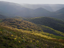 Spring forest on sunny hills Stock Photos