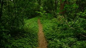 Spring forest before thunder-storm. This image no from tropical forest , for example Costarica etc., but it is a footpath trough a ordinary forest by river The royalty free stock photo