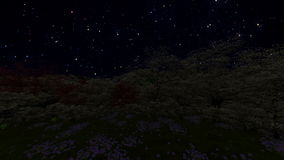 Spring forest, time lapse starry sky stock video footage