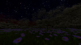 Spring forest, timelapse starry sky stock footage