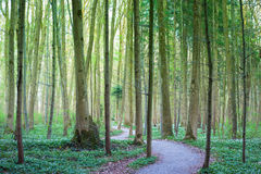 Spring forest trail Royalty Free Stock Images