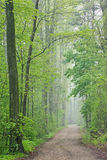 Spring Forest with Trail Stock Image