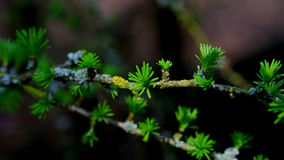 Spring forest. Tree at Kampinoski National Park of Poland Royalty Free Stock Photos