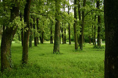 Spring forest and trees. Spring fresh forest and trees royalty free stock photos