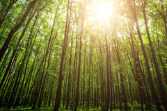 Spring forest trees Stock Images