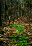 Spring Forest Way. Illustrations,woods landscape royalty free stock photography