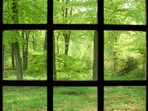 Spring forest through a window Royalty Free Stock Images
