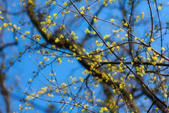 Spring forest. Yellow flowers in the spring forest Stock Photos