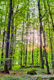 Spring Forrest Sunset Royalty Free Stock Photo