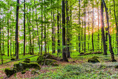 Spring Forrest Sunset Royalty Free Stock Photography