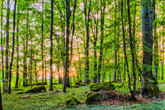 Spring Forrest Sunset Royalty Free Stock Photos