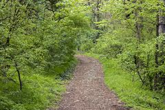 Spring Forrest Trail. With green trees and curved trail in wood royalty free stock photo
