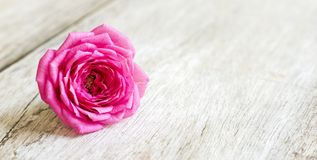Spring, springtime concept - pink flower Royalty Free Stock Photography