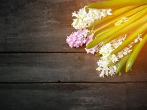 Hyacinth flowers on wooden background. Spring fowers on aged wooden background royalty free stock photos