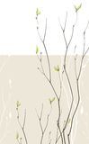 Spring fragile twigs. Spring background with green fragile twigs Stock Photos