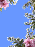 Spring frame Royalty Free Stock Photo