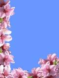 Spring frame Royalty Free Stock Image