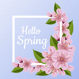 Spring frame with cherry flower and leaf. Spring frame with pink cherry flower and leaf, with hello spring message Stock Photography