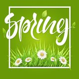 Spring frame green grass and daisies. Spring frame with green grass and daisies Stock Images