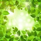 Spring frame of green leaves Stock Photos