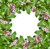 Spring frame with green leaves and lilac flowers. Isolated on white background. Flat lay. Top view Royalty Free Stock Image